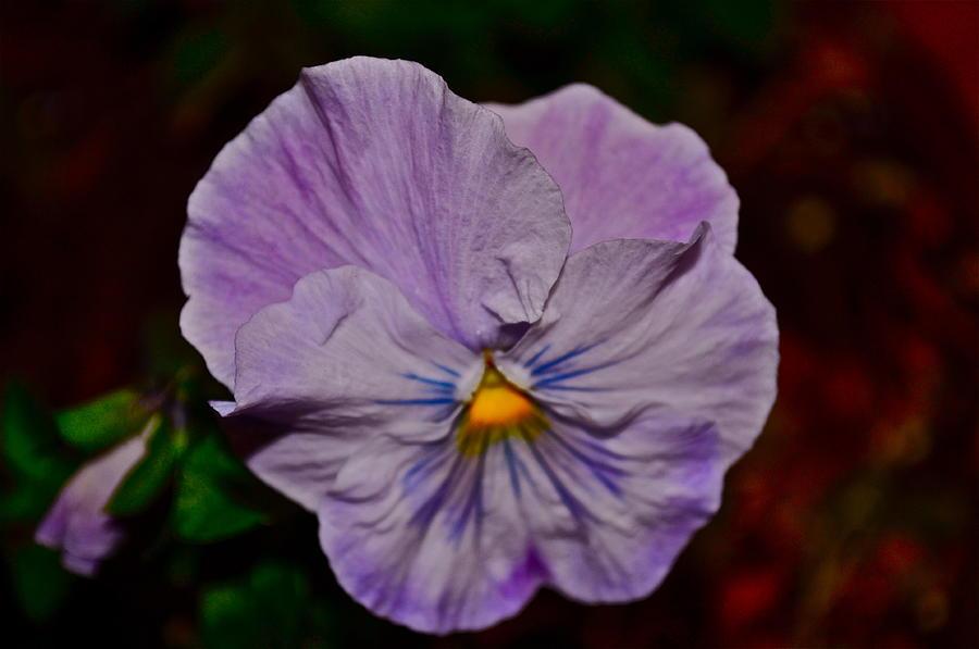 Wall Flower Photograph