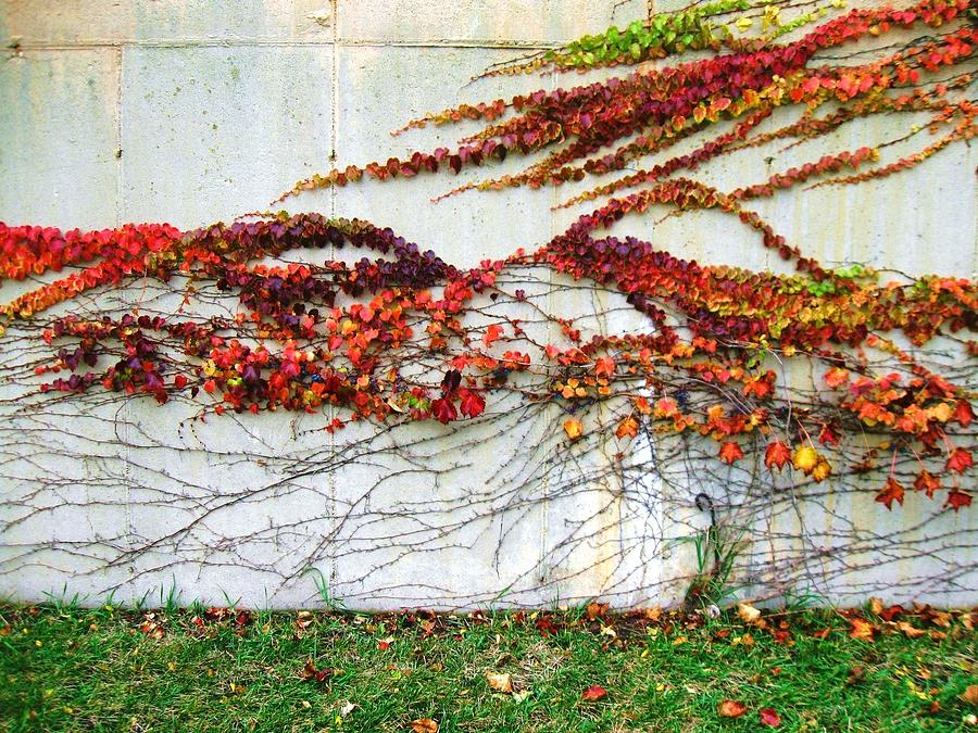 Wall Of Fall Photograph