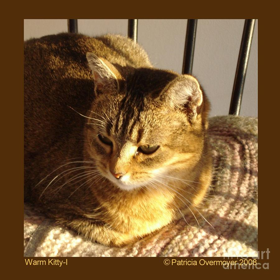 Cat Photograph - Warm Kitty-i by Patricia Overmoyer