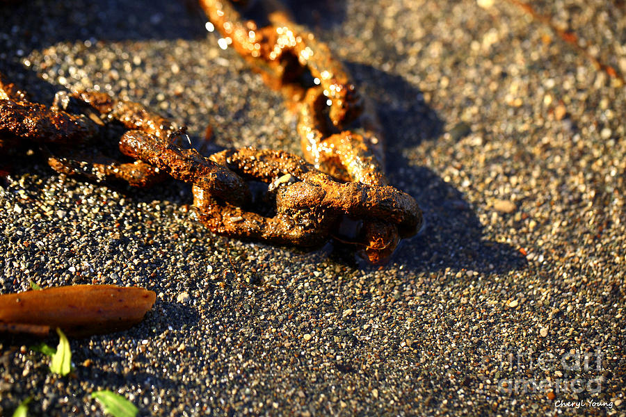 Images Of Washed Up Chain Photograph - Washed Ashore by Cheryl Young