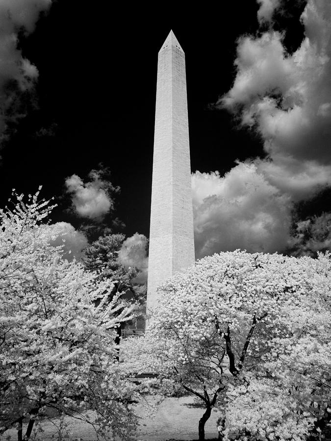 Washington Monument During Cherry Blossom Festival In Infrared Photograph  - Washington Monument During Cherry Blossom Festival In Infrared Fine Art Print