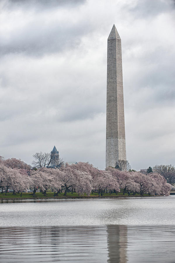 Washington Monument During Cherry Blossom Festival  Photograph
