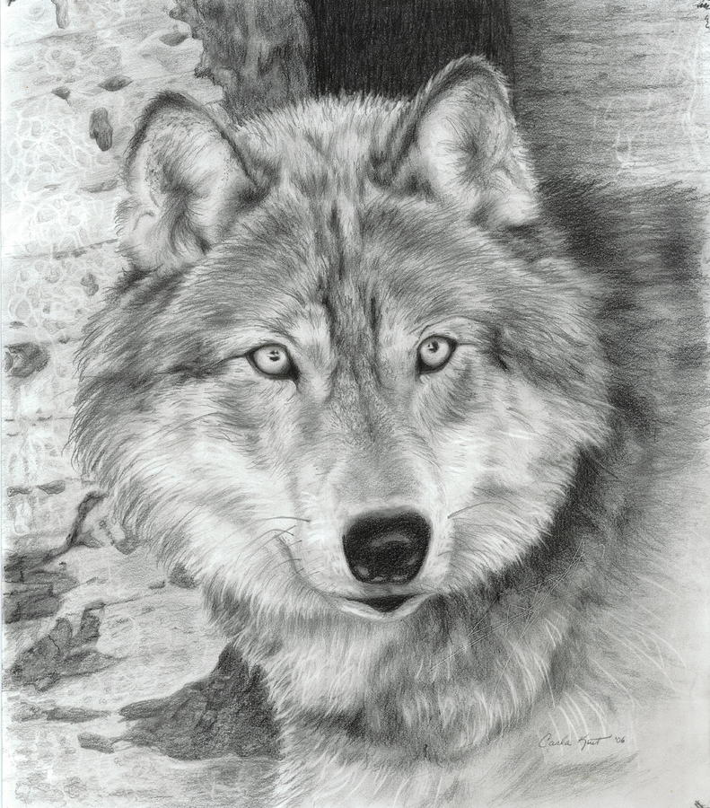 Watchful Eyes Drawing