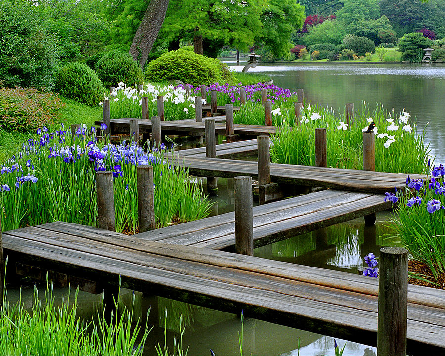Image gallery japanese water garden for Stobo water gardens