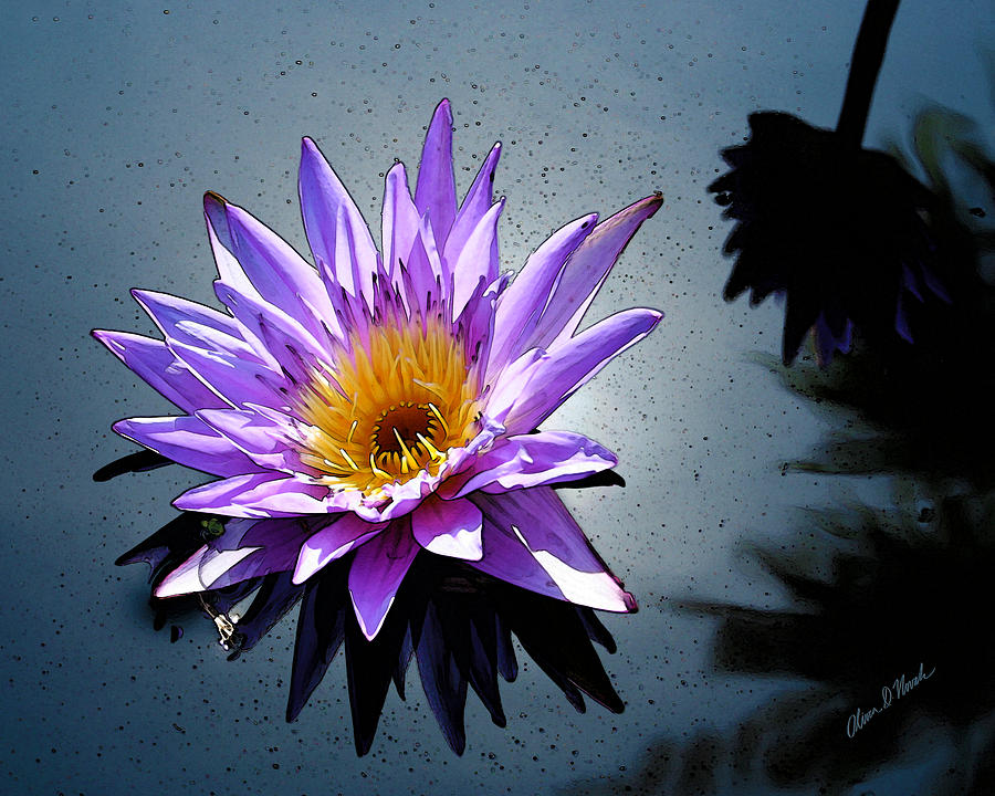Water Lily Dream At Fairchild 2 Mixed Media  - Water Lily Dream At Fairchild 2 Fine Art Print