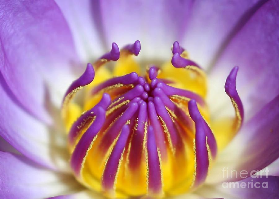 Lotus Photograph - Water Lily Sticky Fingers by Sabrina L Ryan