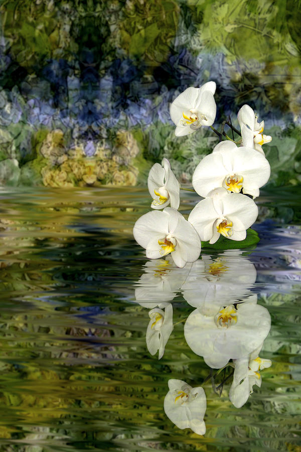 Water Orchid Photograph
