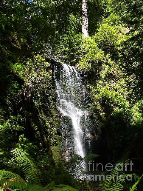 Waterfall Photograph - Waterfall by Anita V Bauer