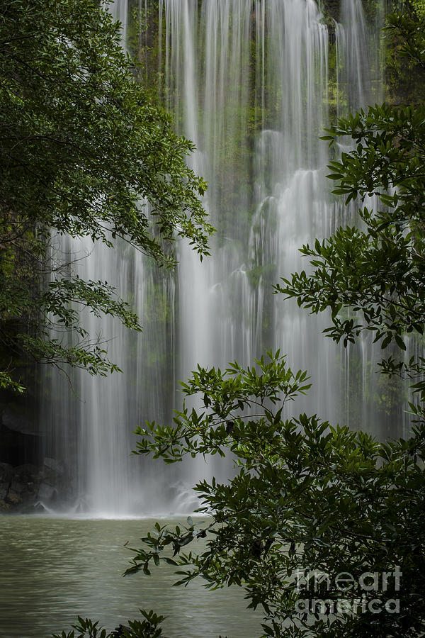 Waterfall Through Trees Photograph  - Waterfall Through Trees Fine Art Print