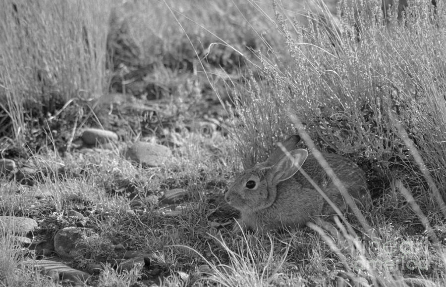 Watership Down Photograph  - Watership Down Fine Art Print