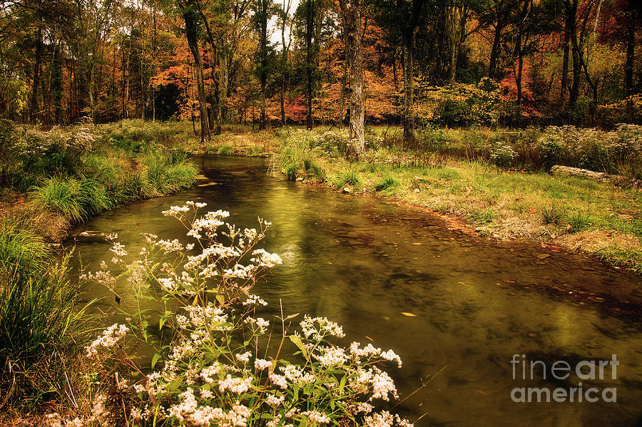 Waterside Flowers Photograph  - Waterside Flowers Fine Art Print