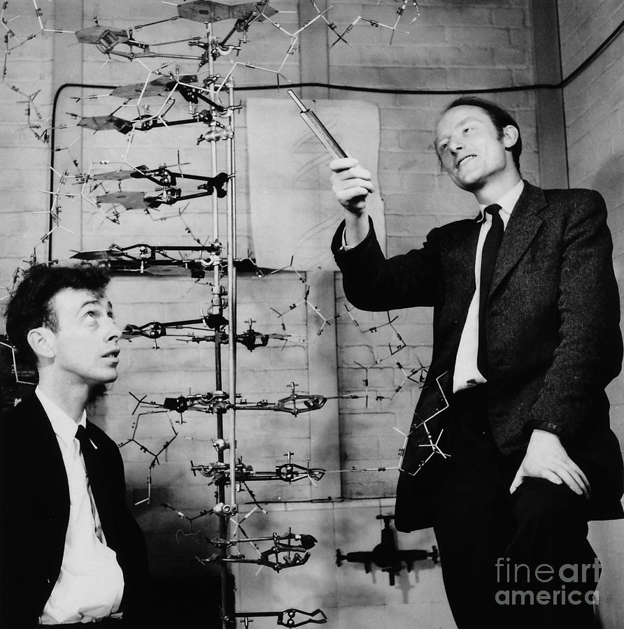 Watson And Crick Photograph  - Watson And Crick Fine Art Print