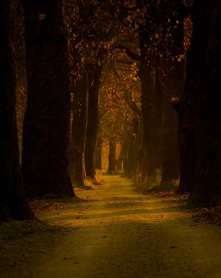 Road Photograph - Way In The Forest by Zafer GUDER