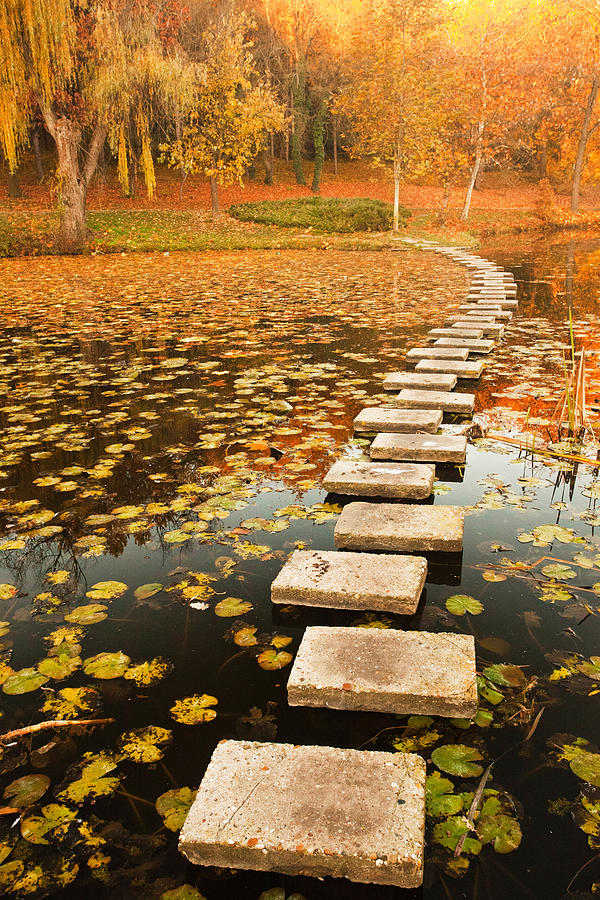 Way In The Lake Photograph  - Way In The Lake Fine Art Print