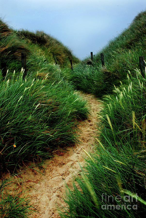 Way Through The Dunes Photograph  - Way Through The Dunes Fine Art Print