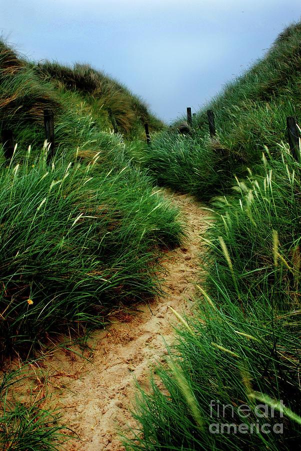 Way Through The Dunes Photograph