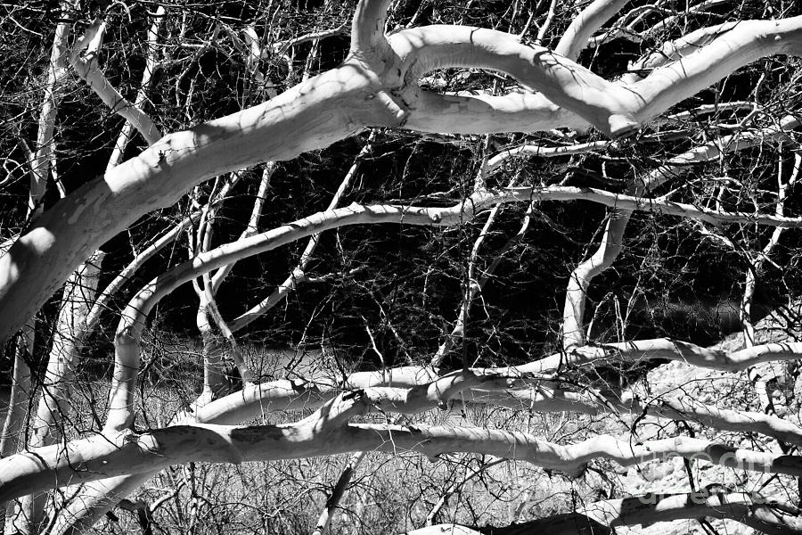 Web Of Branches Photograph  - Web Of Branches Fine Art Print