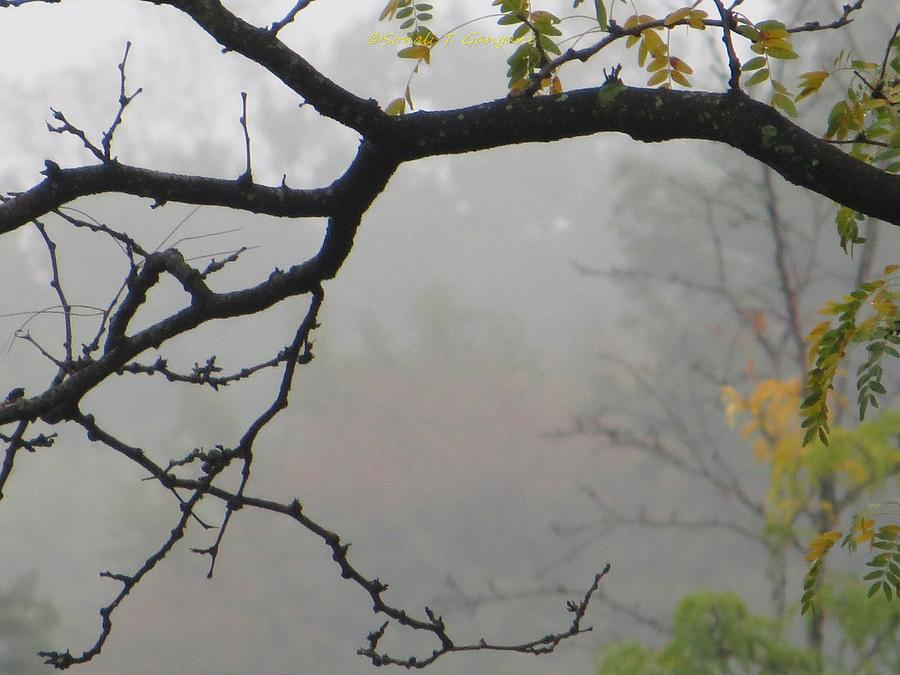 Wednesday Mist Photograph
