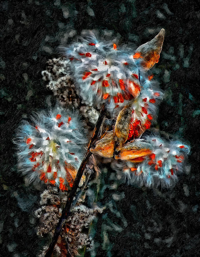 Weed Galaxy Painted Version  Photograph  - Weed Galaxy Painted Version  Fine Art Print