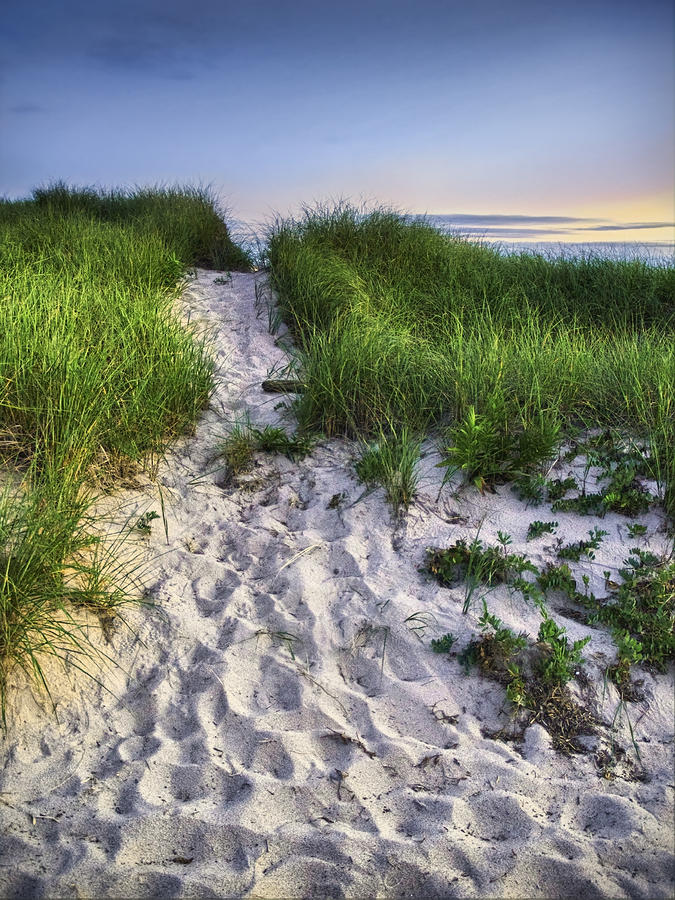 Wellfleet Beach Path Photograph