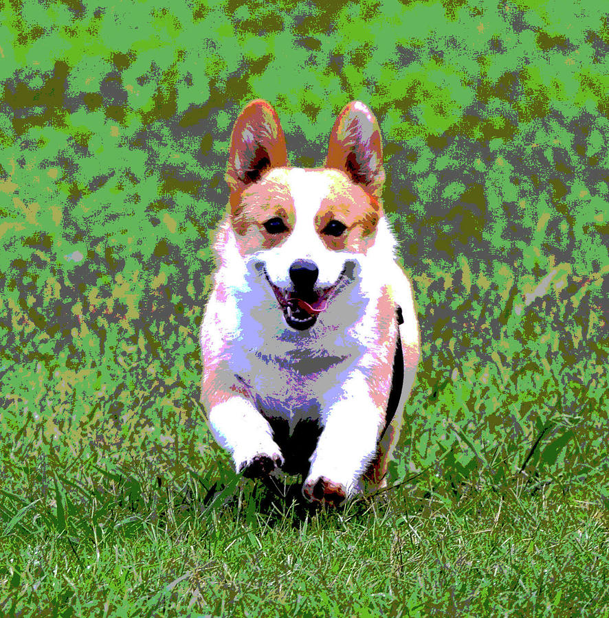 Welsh Corgi Digital Art  - Welsh Corgi Fine Art Print