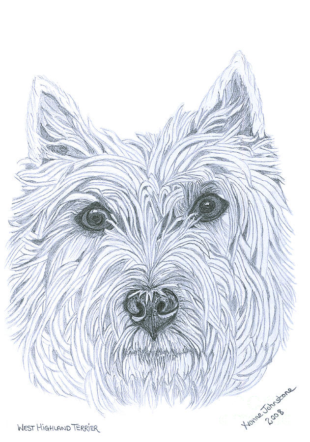 West Highland Terrier Drawing  - West Highland Terrier Fine Art Print