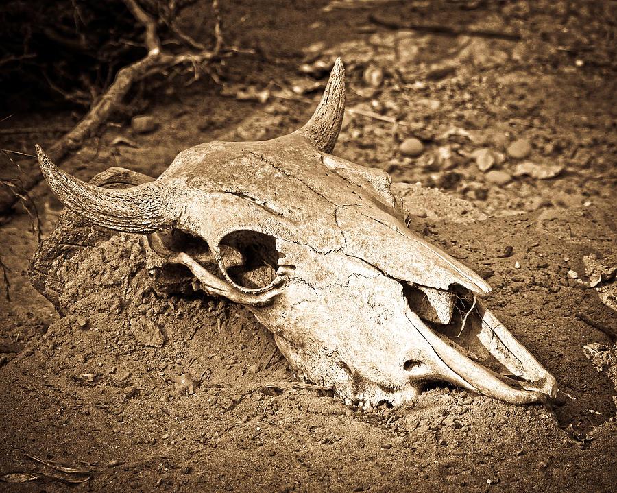 cow skull and desert - photo #1