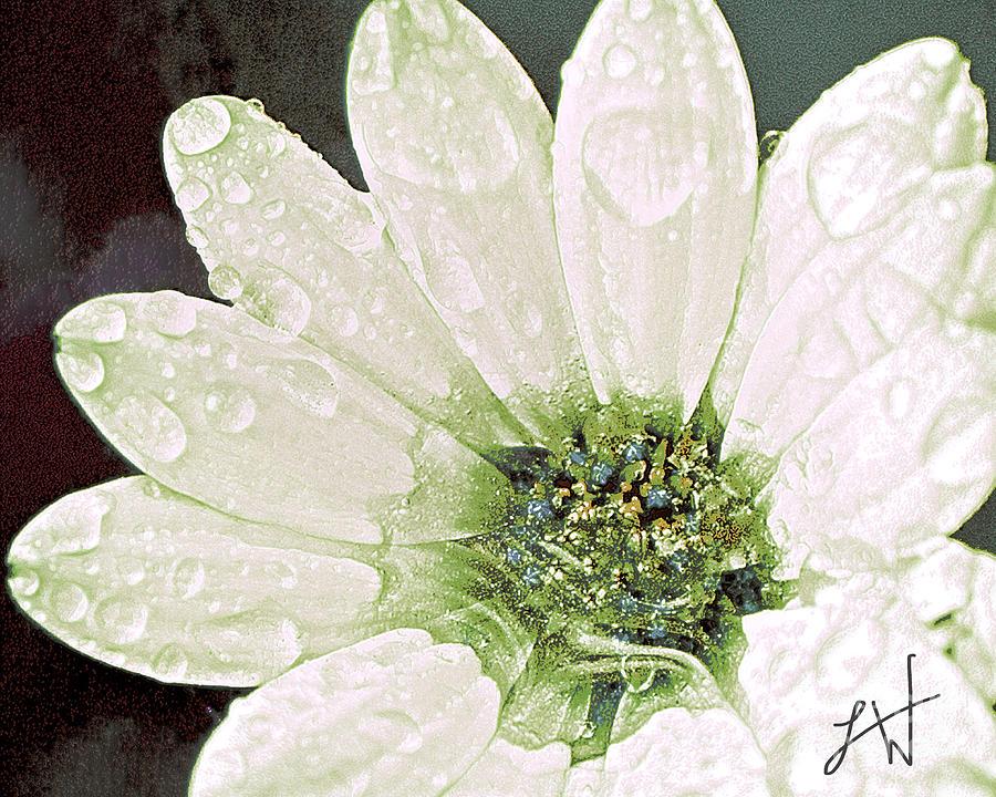 Wet Petals Digital Art