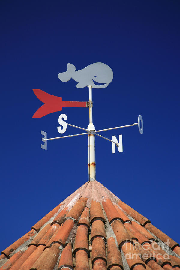 Whale Weather Vane Photograph  - Whale Weather Vane Fine Art Print