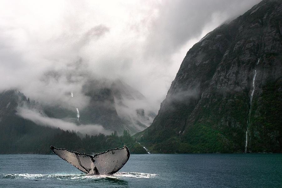 Whales Tale Photograph