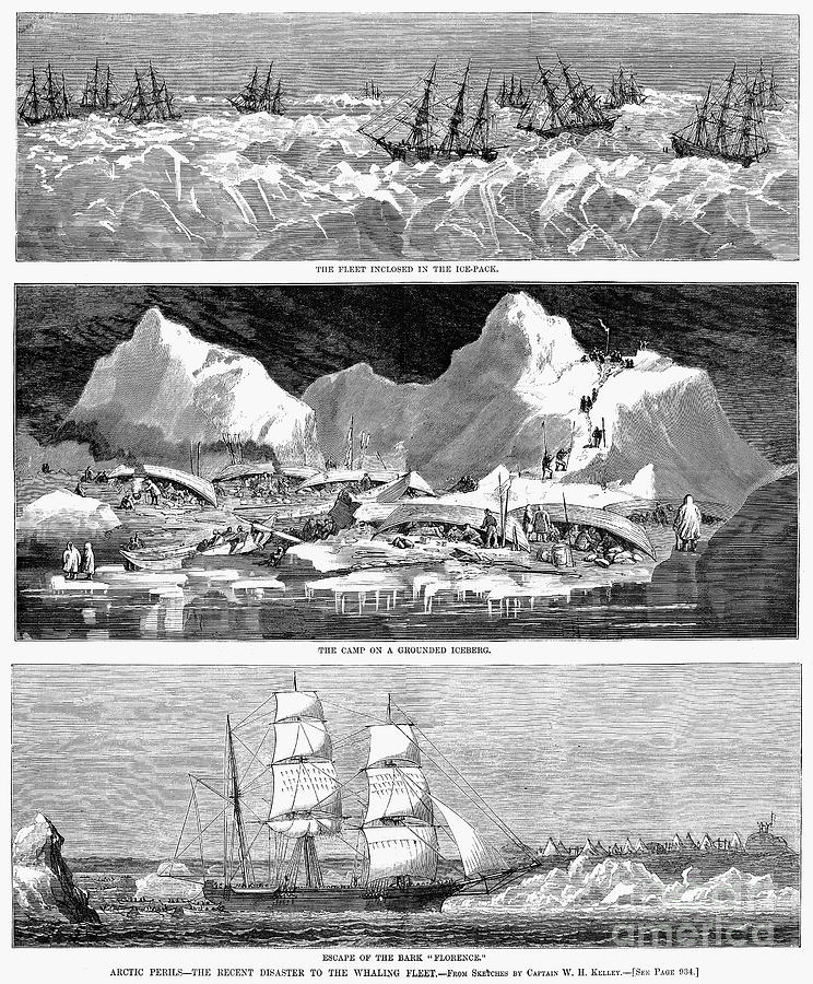 Whaling Fleet In Ice, 1876 Photograph