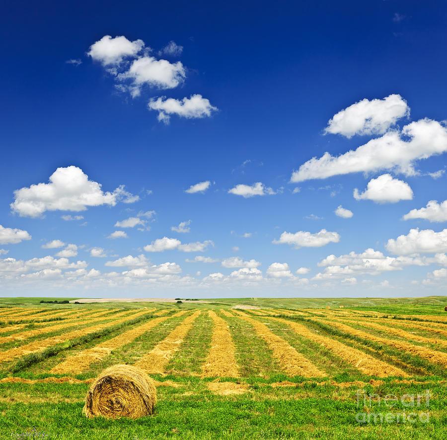 Wheat Farm Field At Harvest Photograph