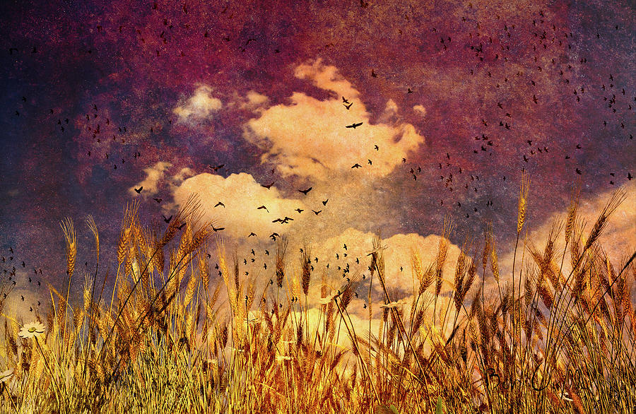 Wheat Field Dream Photograph  - Wheat Field Dream Fine Art Print