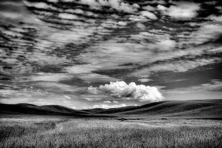 Wheat Fields In The Palouse Photograph  - Wheat Fields In The Palouse Fine Art Print
