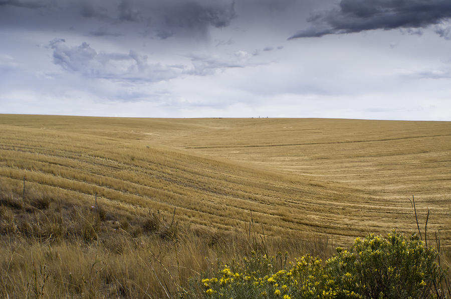Wheat Fields With Storm Photograph