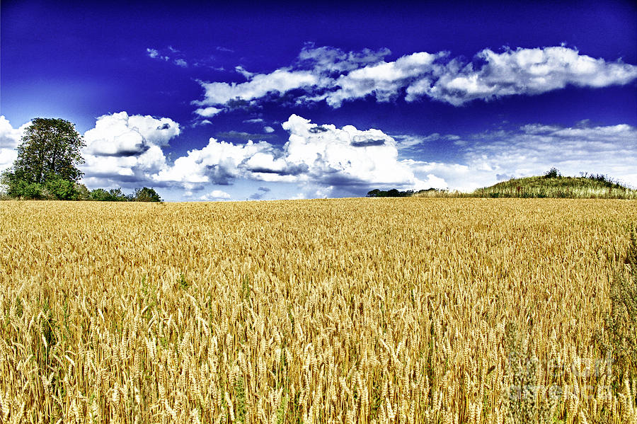 Wheat Photograph  - Wheat Fine Art Print