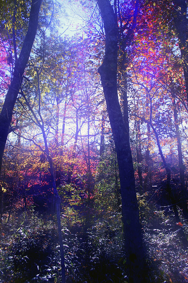 When Forests Dream Photograph  - When Forests Dream Fine Art Print