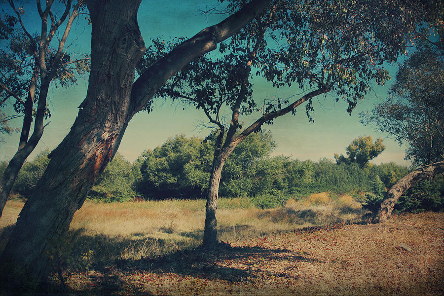 Big Break Regional Shoreline Park Photograph - When I Was Your Girl by Laurie Search