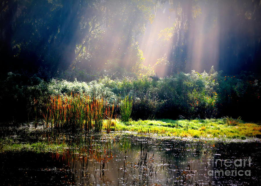 When Morning Hits The Marsh Photograph