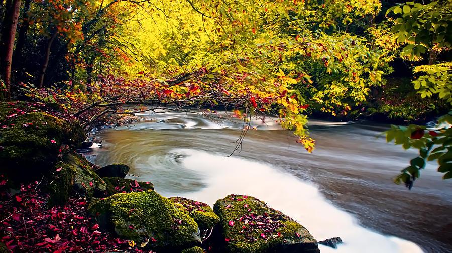 Co Armagh Photograph - Whirlpool Canopy by Kim Shatwell-Irishphotographer