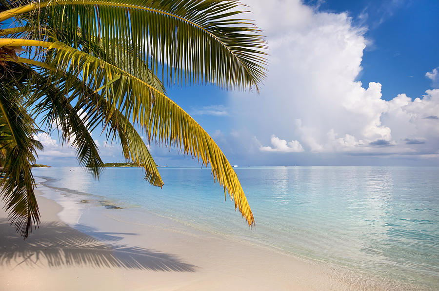 Whispering Palm On The Tropical Beach Photograph