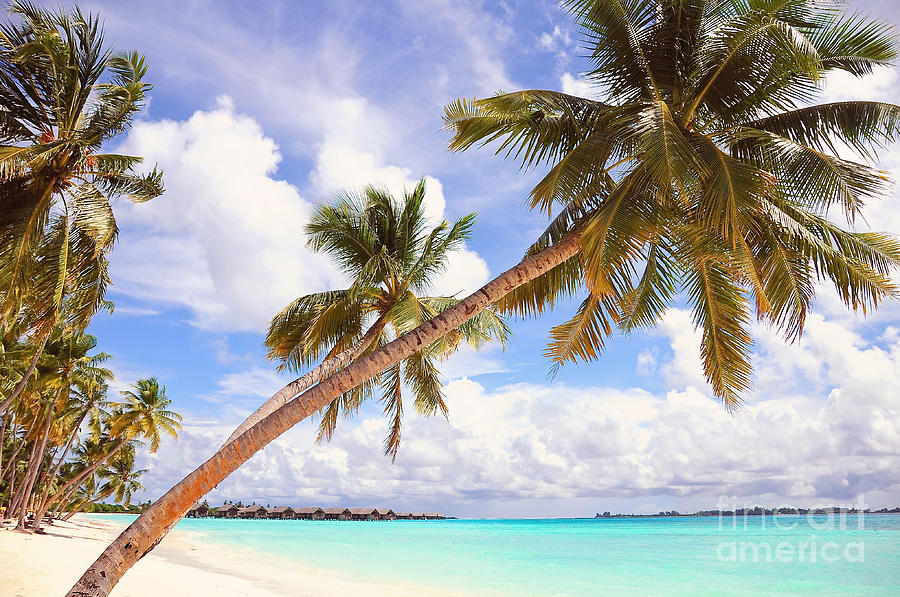 Whispering Palms. Maldives Photograph