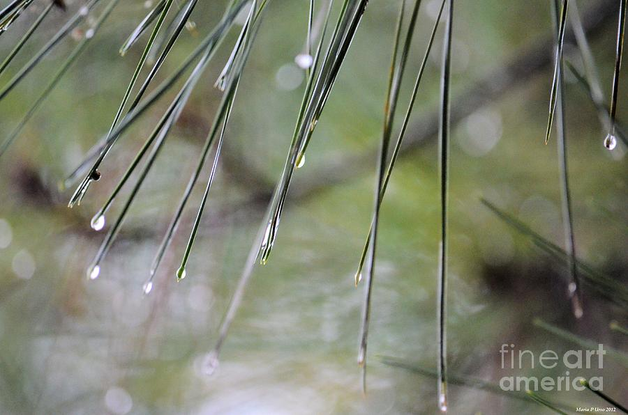 Whispers Of An Autumn Rain Photograph  - Whispers Of An Autumn Rain Fine Art Print