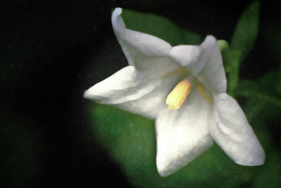 Balloon Flower Photograph - White Balloon Flower-faux Painting by  Onyonet  Photo Studios