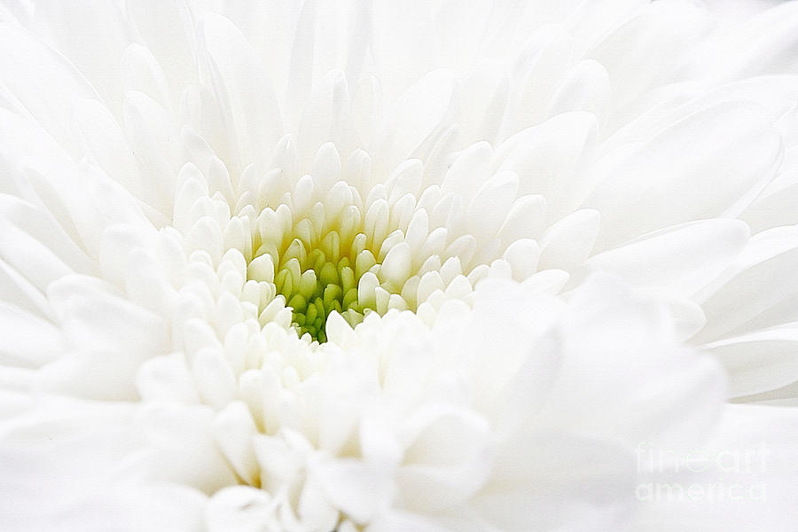 White Beauty Photograph