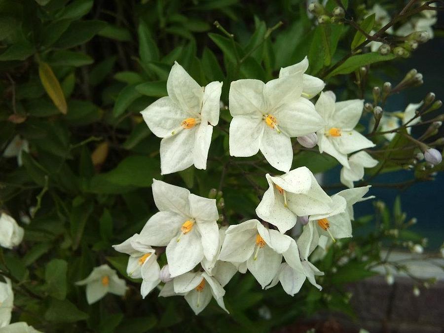 White Bloom Photograph