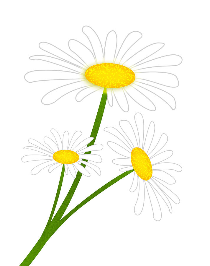 White Daisy Digital Art  - White Daisy Fine Art Print