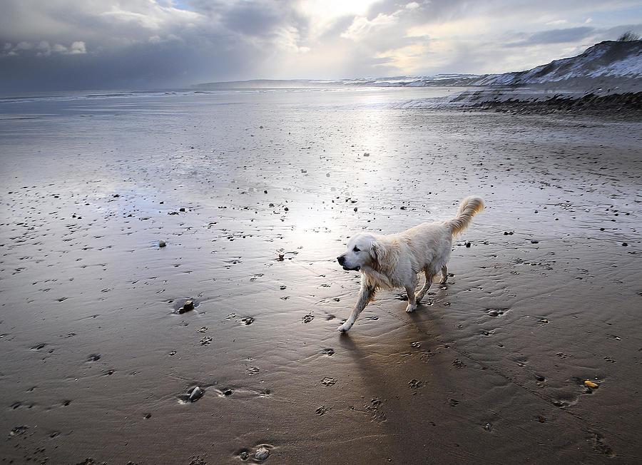 White Dog Photograph