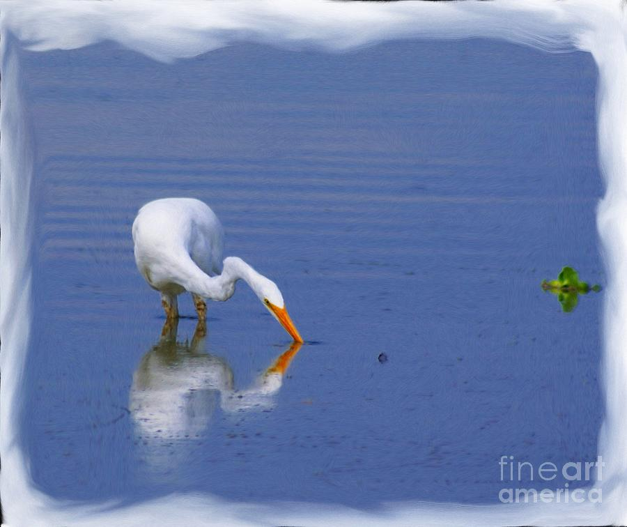 White Egret Hunting For A Fish Photograph  - White Egret Hunting For A Fish Fine Art Print