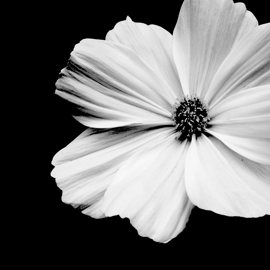 Flower prints black and white comousar flower prints black and white white flower on black mightylinksfo Image collections